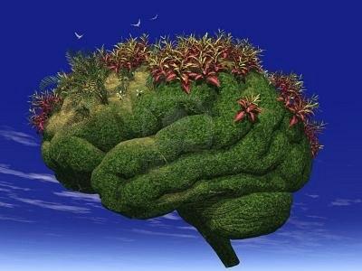 Your-Brain-is-Like-A-Garden