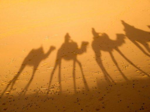 camello-sobras-en-en-salud-energetica-por-ana-maria-olivaparte-1comentarios-por-gisela-salud-energética-por-ana-maria-oliva-–-parte-1-8211-comentarios-ID160433-620x465